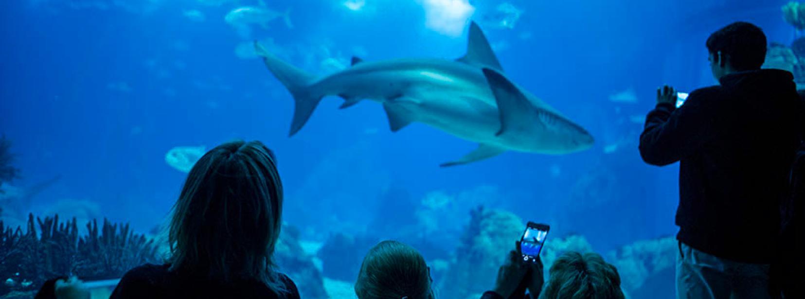 Lisbon oceanarium ocean rio de lisboa lisbon for Aquarium valencia precio