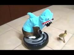 #animais engraçados
